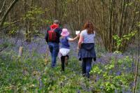 Bluebell Walk HOKH